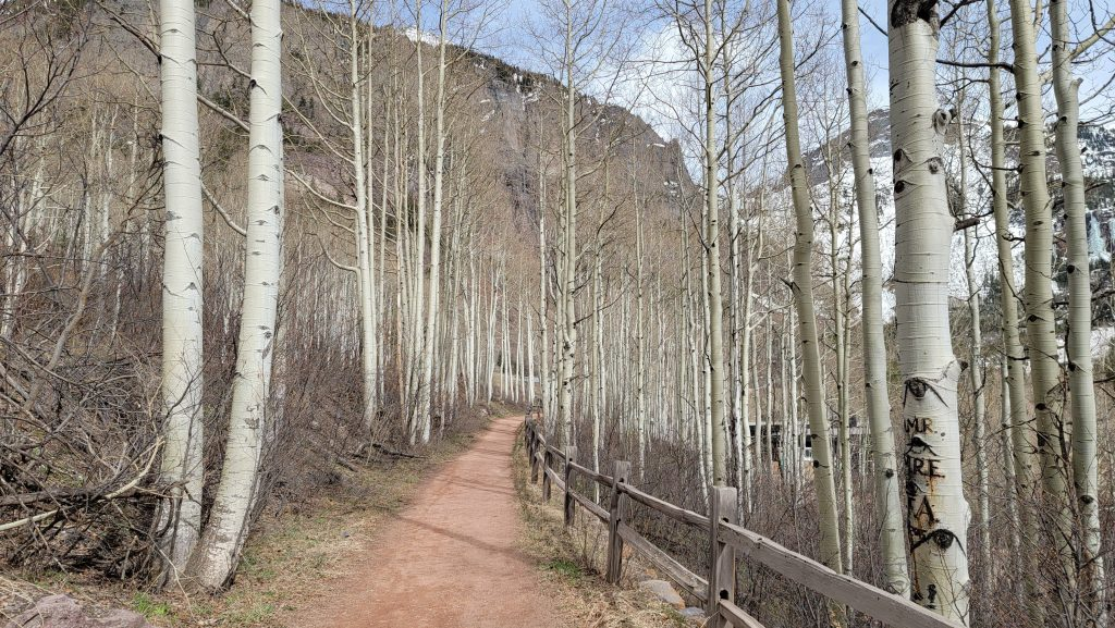 The well worn trail running between an aspen grove on the Telluride River hike.